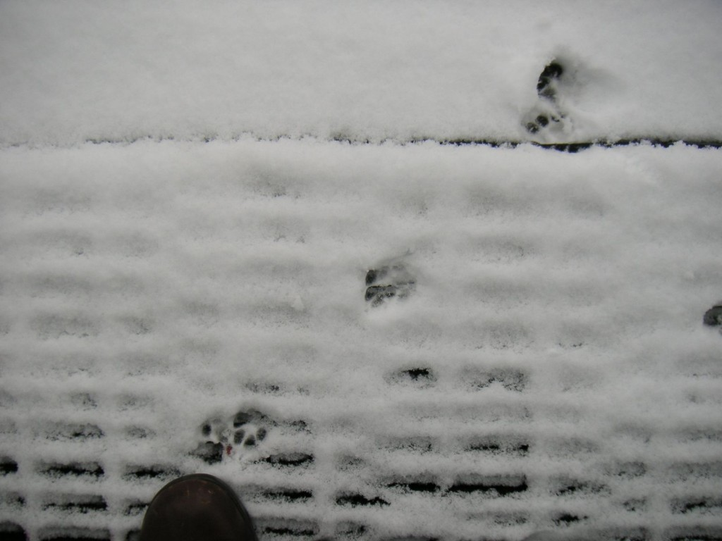 "Oscar's paw prints in the snow. He only made it 3"" from the mat"